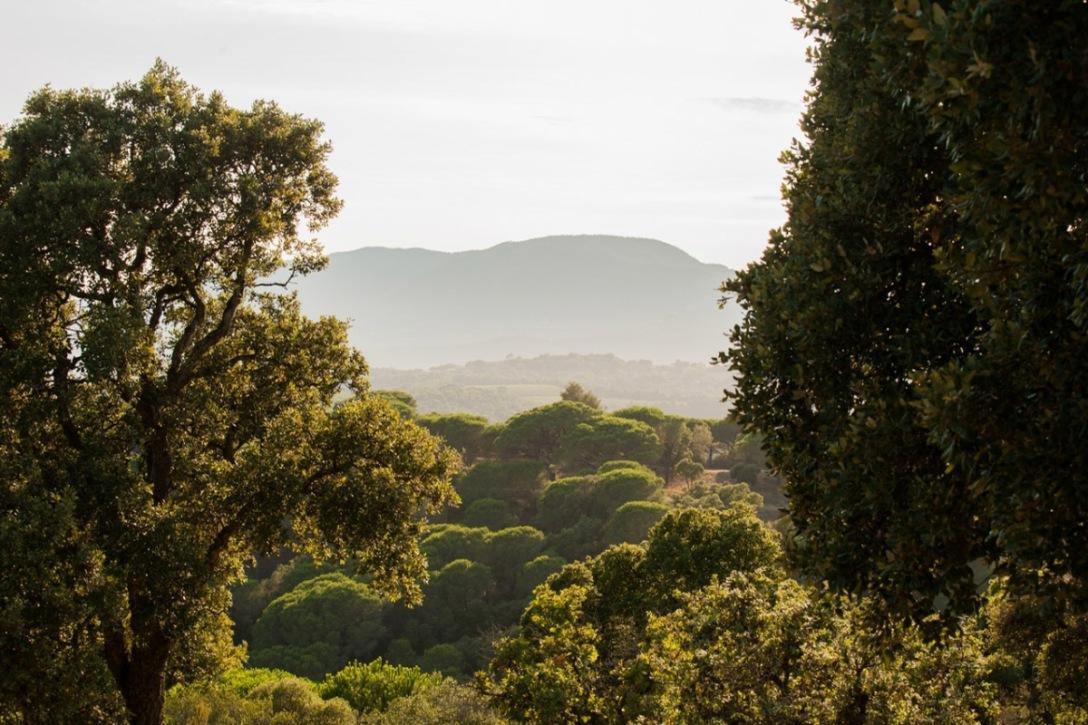 saint-tropez-landscape-photo-25